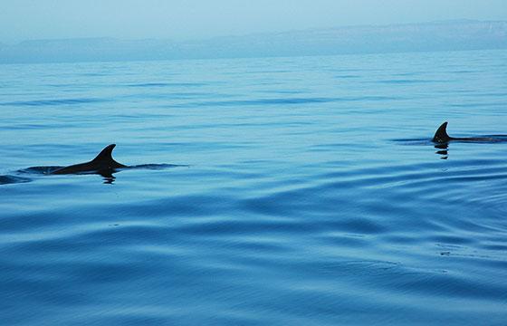 Dolphins in the blue Sea of Cortez, near La Paz, Baja California Sur, Mexico waters-Wonderlane-Flickr