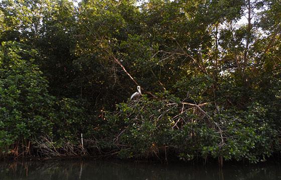Pelícano-Pedro Clavel-Flickr