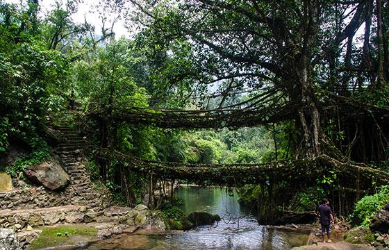 Double Decker Living Root Bridge-Editada-Ashwin Kumar-http://bit.ly/1OQdtQx-Flickr