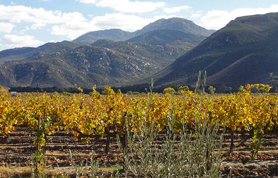 LA Cetto, Valle de Guadalupe, Ensenada-Hernán García Crespo-Flickr