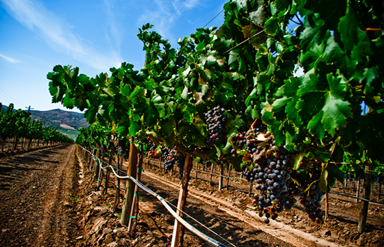 Ruta del vino en México