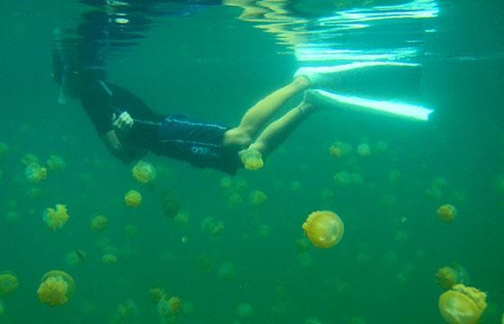 Snorkeling with Jellyfish-tata_aka_T-Flickr
