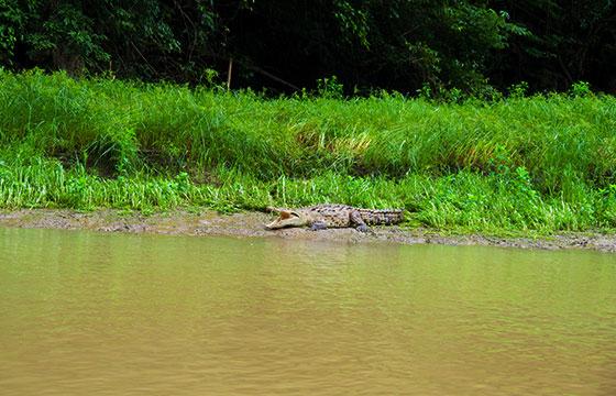 Crocodile at Canon del Sumidero-Laurent de Walick-Flickr