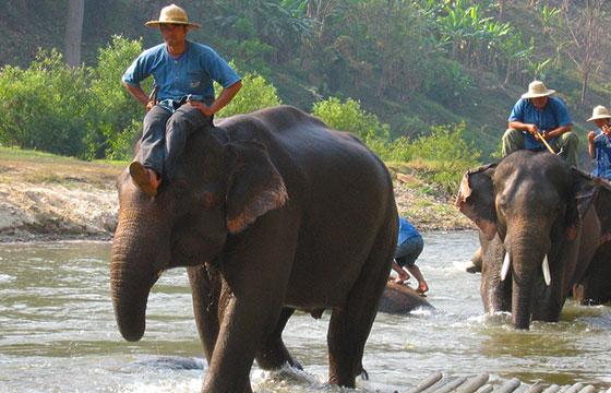 Mekong Elephant Camp, Chiang Mai, Thailand-Bert Dickerson-Flickr