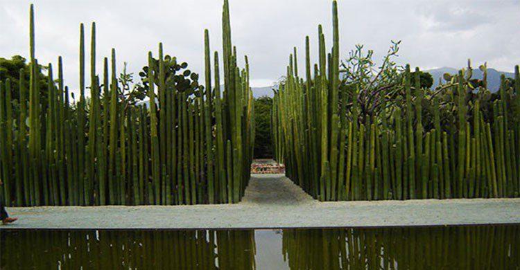 Lugares turísticos de Oaxaca, Jardín Etnobotánico