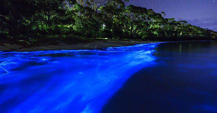 Bioluminiscencia en Manialtepec