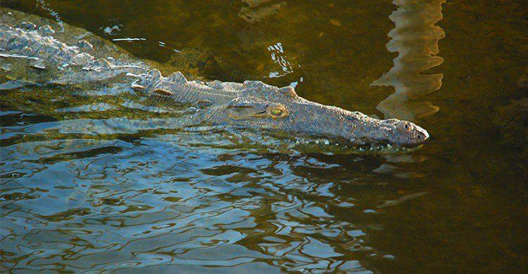 Agua salada en la Punta Sur de cocodrilo-LisaEPerkins-iStock