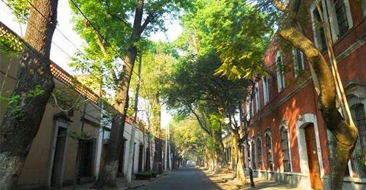 Calle Francisco Sosa