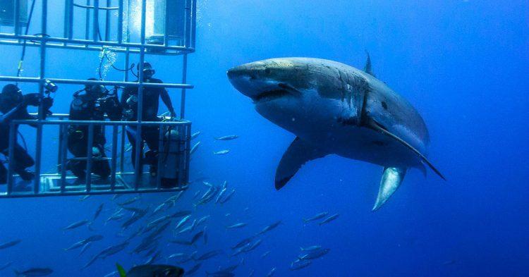 Fuente imagen: Gansbaai Shark Cage Diving
