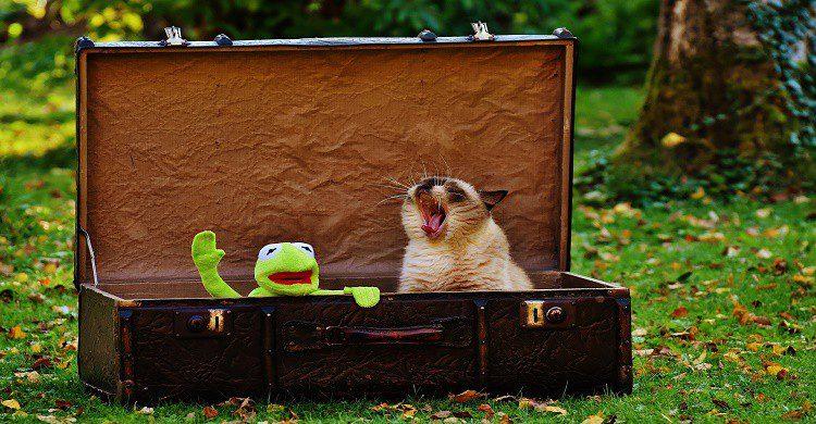 viajar-con-tu-mascota-6
