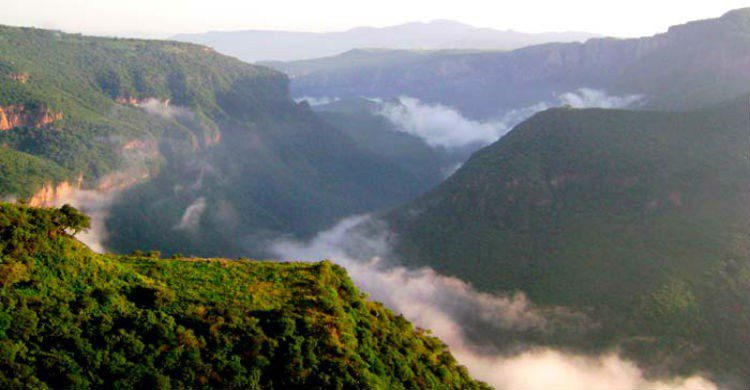 Barranca de Huentitán con neblina