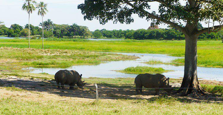 Rinocerontes en parque Yumka
