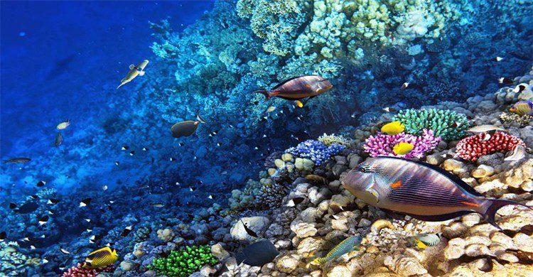 Actividades laguna en Tulum, Quintana Roo