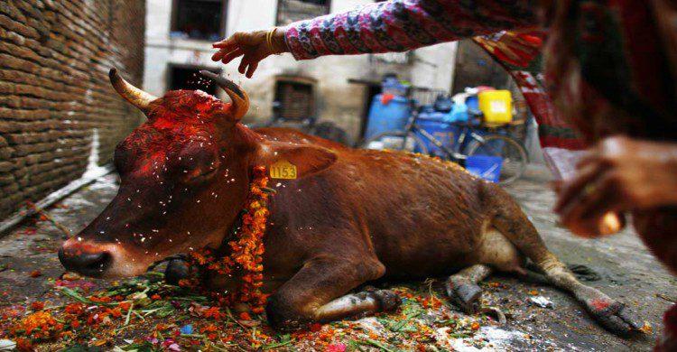 Gai Jatra festival de la vaca Nepal