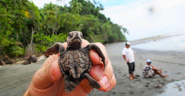 rescate de tortugas