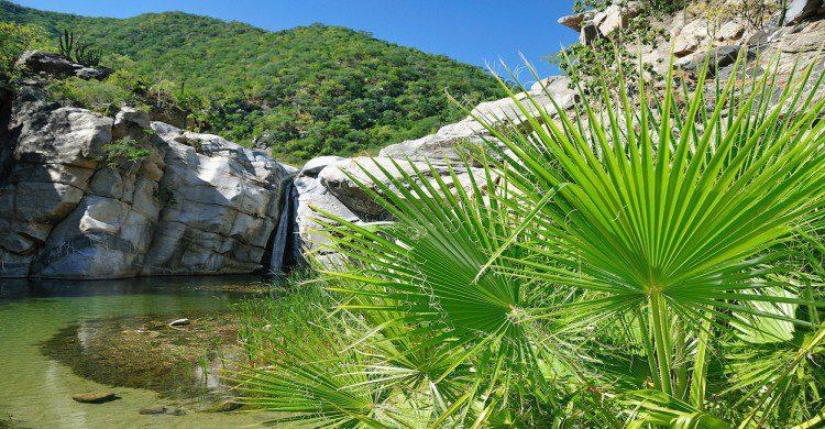 Vegetación verde en el Cañón de la Zorra con cascada de fondo
