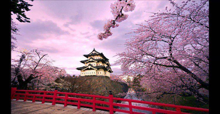 JapónImagen de un palacio en Japón y árboles de cerezo