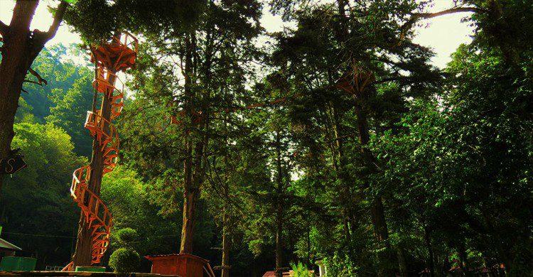 Canopy en Dos Aguas, escalera de espiral en árbol