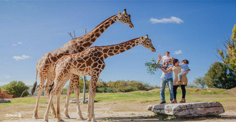 Jirafas en Africam Safari con familia de día