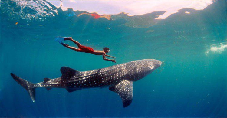 Hombre con short rojo en el mar practicando snorkel
