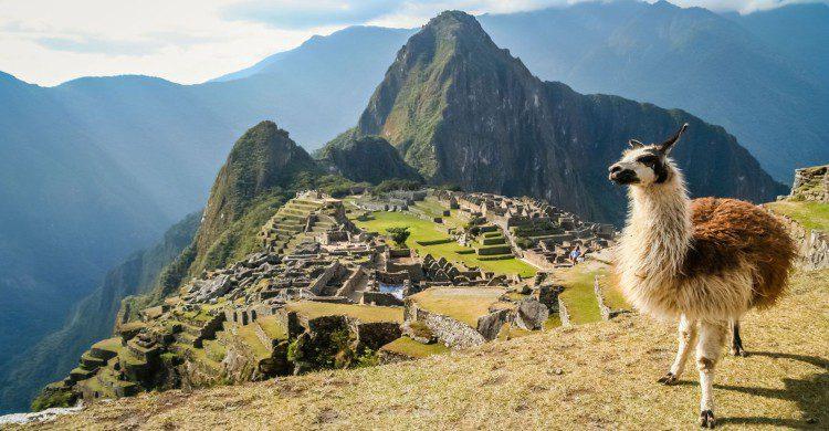 Machu Picchu con llama