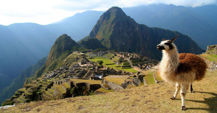 Llama con la ciudad Inca Machu Picchu a sus espaldas