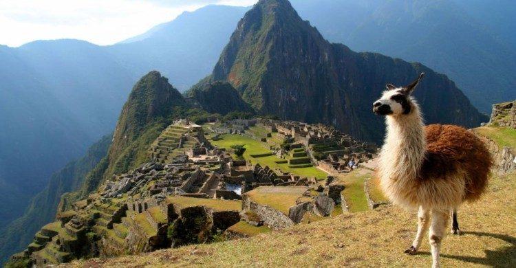 Machu Picchu, Perú de día con llama
