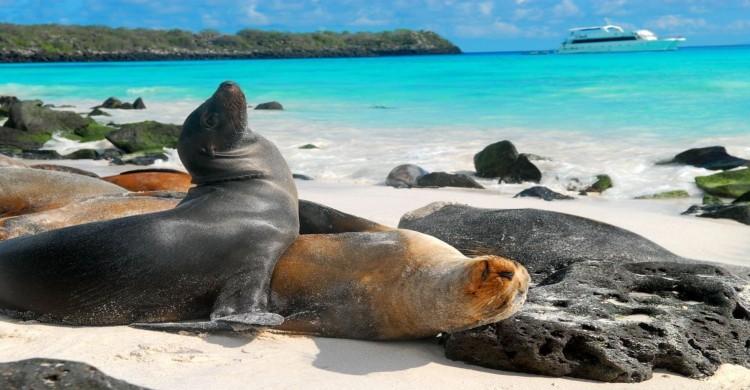 Focas en isla Galápagos, Ecuador de día con arena blanca y mar azul