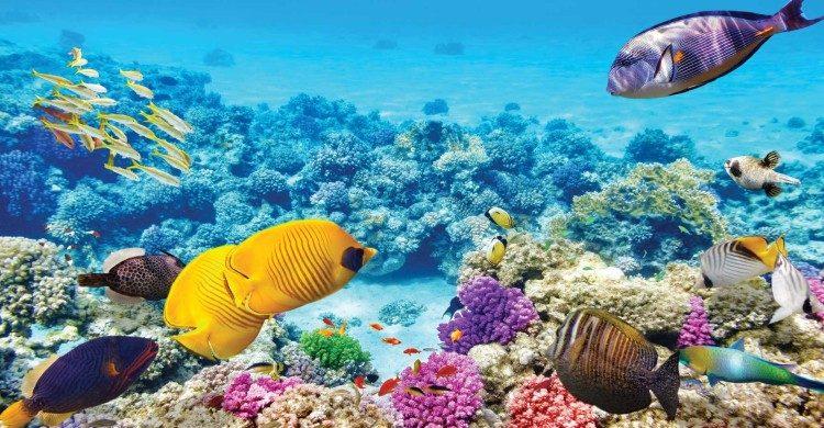 Peces de colores en agua cristalina de la Gran Barrera de Coral