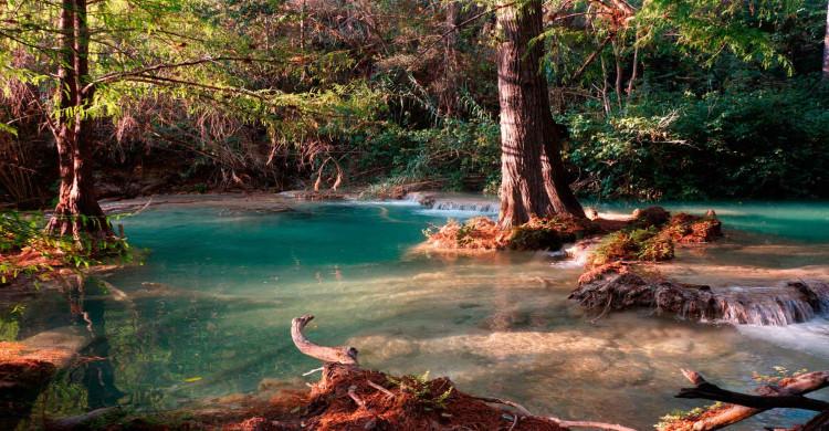 árboles sobre pozas azul turquesa de las Cascadas Las 3 Tzimoleras