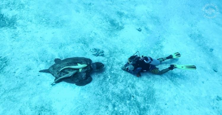 Buzo con tortuga en mar azul